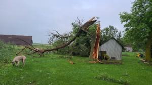 Tree Snapped Courtesy John G